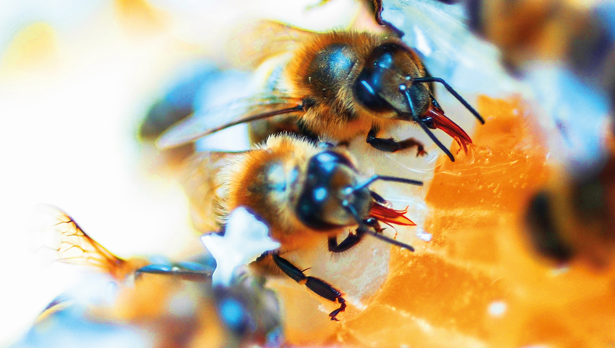 TONE Bees
